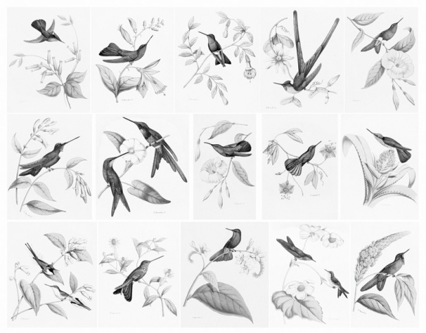 Bevalet's Hummingbirds and Flowers Sample Images