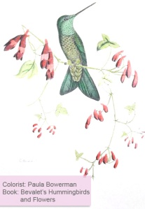 Bevalet's Hummingbirds and Flowers Adult Coloring book