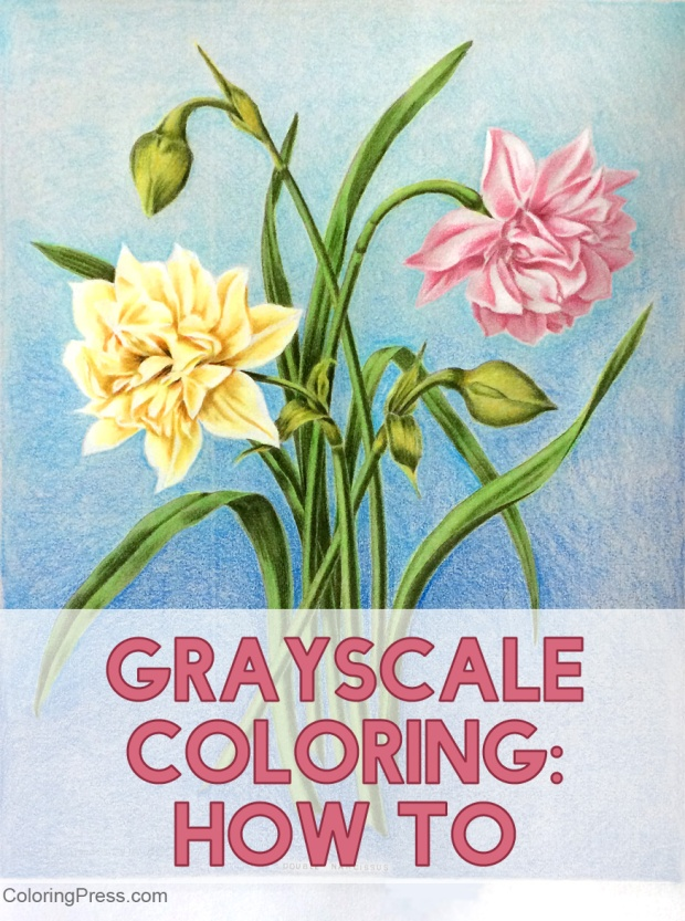 Grayscale Coloring How To - A Basic Tutorial